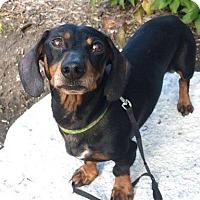 Adopt A Pet :: Beckett/Adopted - Eldora, IA