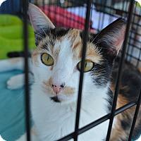 Adopt A Pet :: Abigail - Ogden, UT