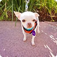 Adopt A Pet :: *Joker Rollercoaster - Pittsburg, CA