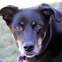Adopt A Pet :: Cocoa - Springfield, MO