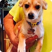 Adopt A Pet :: Ben - Beavercreek, OH