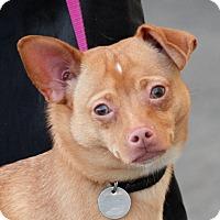 Adopt A Pet :: Juan - Palmdale, CA