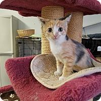 Adopt A Pet :: PENELOPE - Phoenix, AZ