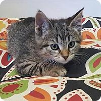 Adopt A Pet :: Hank - House Springs, MO