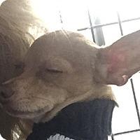 Adopt A Pet :: Aiden - San Marcos, CA