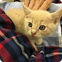 Adopt A Pet :: Paxton - Asheville, NC