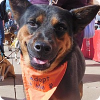Adopt A Pet :: Maggie Mae - Rockville, MD