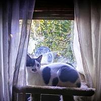Adopt A Pet :: Taylor - Carlisle, PA