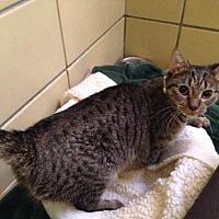 Adopt A Pet :: Kimchi (Westhampton) - New York, NY