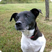 Jack Russell Terrier Mix Dog for adoption in Portsmouth, Virginia - Jolly