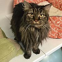 Adopt A Pet :: Duchess - Greensburg, PA