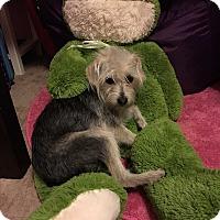Adopt A Pet :: Abby - Los Angeles, CA