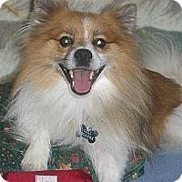 Adopt A Pet :: HAPPY - Mahopac, NY