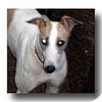 Adopt A Pet :: Punky - Roanoke, VA