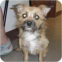 Adopt A Pet :: Miriam - Phoenix, AZ