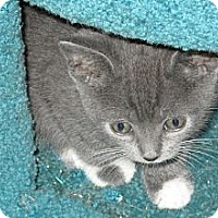 Adopt A Pet :: Dash - Jeffersonville, IN
