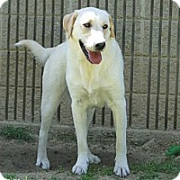 Adopt A Pet :: Jake - Lewisville, IN