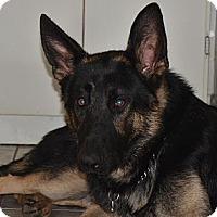 Adopt A Pet :: Logan - Rigaud, QC