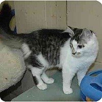Adopt A Pet :: Juliet - Pendleton, OR