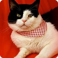 Adopt A Pet :: Dean - Green Bay, WI