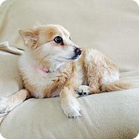 Adopt A Pet :: Peaches (formerly Phoebe) - Las Vegas, NV