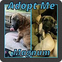 Adopt A Pet :: Magnum - Cheney, KS
