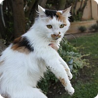 Adopt A Pet :: ELIZA - Newport Beach, CA