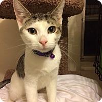 Adopt A Pet :: Sofia - Sunny Isles Beach, FL