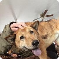 Adopt A Pet :: Maxine - Los Angeles, CA