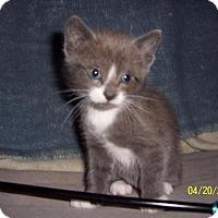 Adopt A Pet :: Shamrock - COMING 5/7 - East Brunswick, NJ