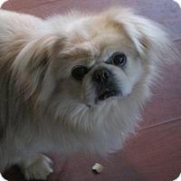 Adopt A Pet :: Oakley - Oakdale, TN