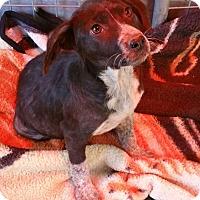 Adopt A Pet :: SANDY - Gustine, CA