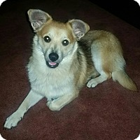 Adopt A Pet :: Leo - New Middletown, OH