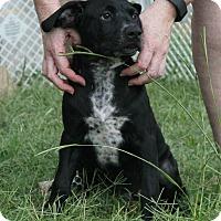 Adopt A Pet :: Alfalfa - Homewood, AL