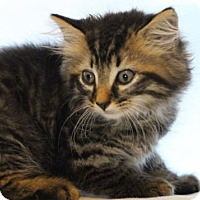 Adopt A Pet :: Austin - Murfreesboro, NC