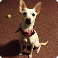 Adopt A Pet :: Tatum - Glendale, AZ