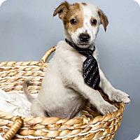 Adopt A Pet :: Prince Charming - Jacksonville, NC