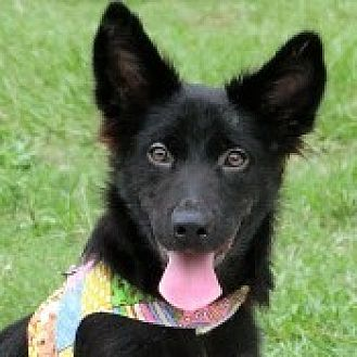 Dachshund Mix Dog for adoption in San Francisco, California - NanNan