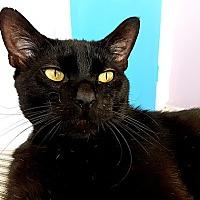 Adopt A Pet :: Montgomery - Santa Ana, CA