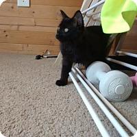 Adopt A Pet :: 3557 Zoey - SC - Council Bluffs, IA