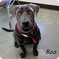 Adopt A Pet :: Boo - Edgewood, NM
