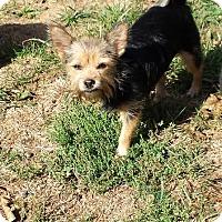Adopt A Pet :: Valentina - Columbia, MD