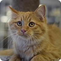 Adopt A Pet :: Hollywood - DFW Metroplex, TX