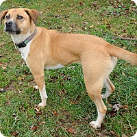 Adopt A Pet :: Emma - Wood Dale, IL