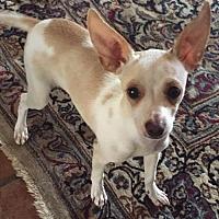 Adopt A Pet :: Bandit - Crestline, CA