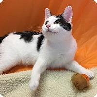 Adopt A Pet :: Toto - Butner, NC