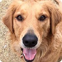 Adopt A Pet :: Reeses/Abby (PLACED) Adoption_Pending - Glendale, AZ