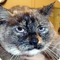 Adopt A Pet :: Mocha - Wildomar, CA