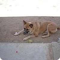 Adopt A Pet :: Amberlyn - Phoenix, AZ