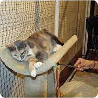Adopt A Pet :: Libby - Alexandria, VA